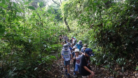 Rainforest Trekking