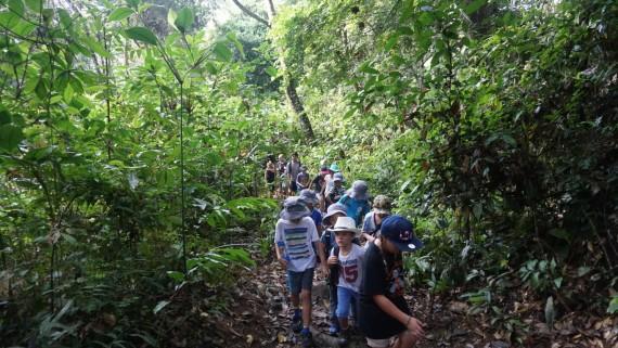 Rainforest Trekking