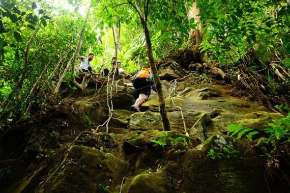 Gunung Panti Trekking